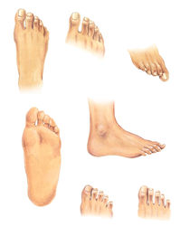Body parts: feet by William Rossin