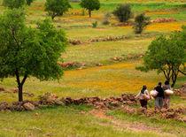 Safran by lethu