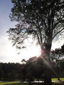 Hi, Mr sunshine by jessizxz