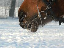 Winter horse von Hana Drahošová