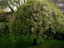 Flowery Bush by Dorottya Sajben