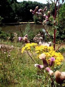 Summer Flowers von Dorottya Sajben