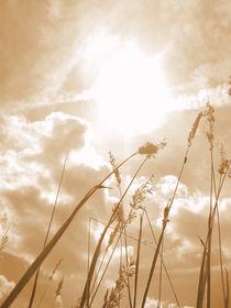 Summer Heat von Dorottya Sajben