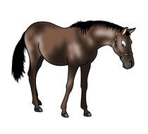 Brown horse by William Rossin