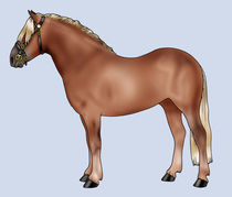 Pony breeds: Haflinger von William Rossin