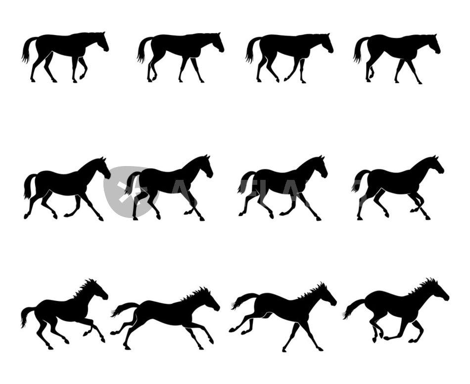u0026quot horse gaits u0026quot  graphic  illustration art prints and posters