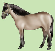 Pony breeds: Sorraia von William Rossin