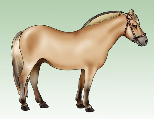 Pony-fjord-breed