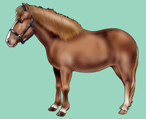 Pony-of-iceland