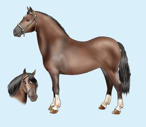 Pony-welsh-mountain