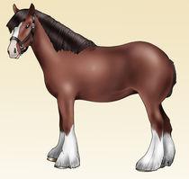 Brown pony - Shire breed by William Rossin