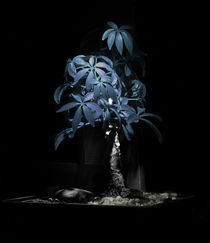 Sorrow Tree by Ryan Brosnan