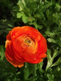 Orange Bliss by Tiffany Ann Perry