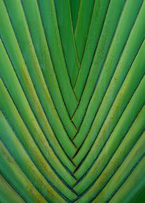 Palmen-Detail von Juana Kreßner