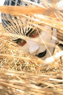 Zebra  von Milena Kolesinskaite