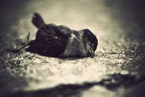 Vintage-dead-bird
