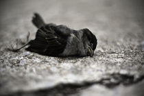 Dead Bird by Zach Burns