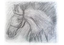razzie horse  by michael  arnott