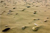 Shells on the sand von Lorenzo Parma