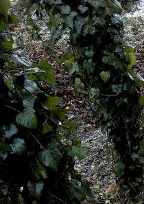 tree legs  by michael  arnott