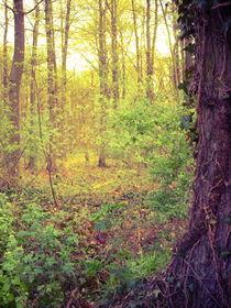 La Forêt von loyan