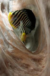 Fishes in a sponge -  von Lorenzo Parma