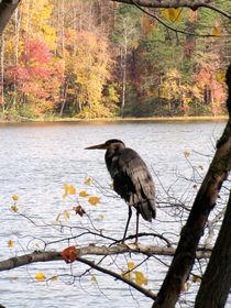 Tern-fall-2009