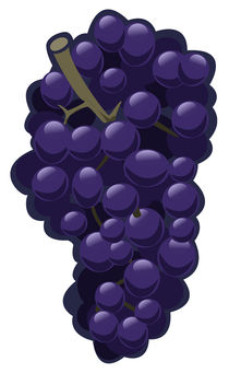 Grapes von William Rossin