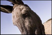 Donkey by Jason Grain