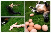 Cat Eggs von Jason Grain
