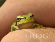 Little frog by Grzegorz Stepnik
