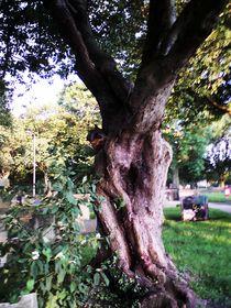 Old and Knarled von autumn-embers