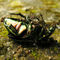 Kumbang-vs-smut