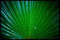 green range by Maciej Juszczak