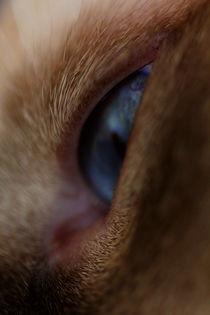 Through his eyes by Tahani Waheeb