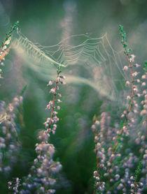 Fairytale von Magda Kolakowska