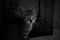 Mini-cat-b-w