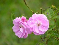 Floracious by Satish Nair