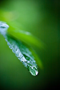 Drops in Green v.2 by Amos Edana