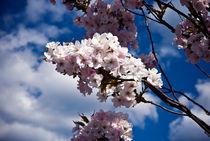 Spring Flowers by Amos Edana