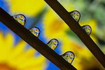 Sunflowersii-fullsize