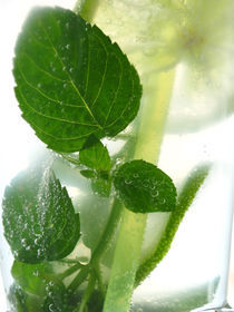 mojito fresh by Roland  Vanoverberghe