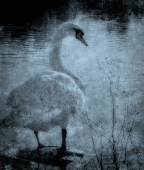 The Swan Of Tuonela by Juha Roisko