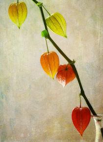 Herbstreife von Franziska Rullert