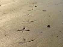 Beach Path by Satish Nair
