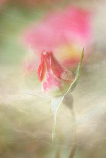 Rose1 von Astrid Cordes-Bogatka