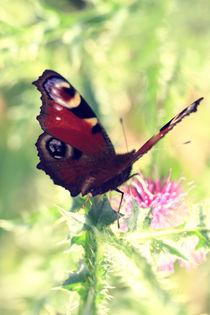 Schmetterling Tagpfauenauge  von Falko Follert