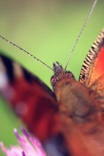 Peacock butterfly by Falko Follert