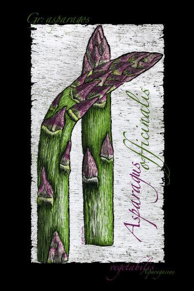 Cbeckusa-vegetabilis1-aspargus