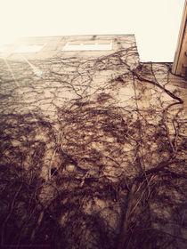 Wall Crawler von Em Davidson